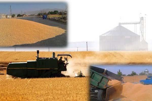 خریدبیش ازیک میلیون تن گندم درکردستان، کسب رتبه دوم کشوردرخریدگندم