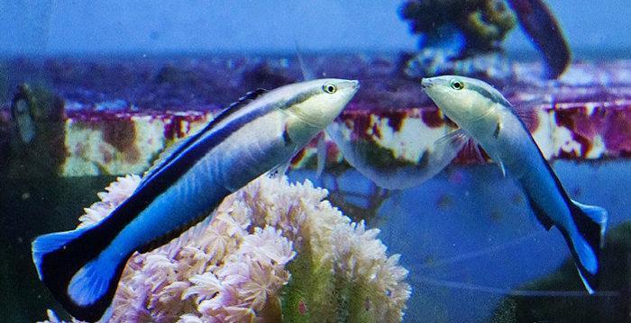 ماهی هایی که خود را در آینه می شناسند