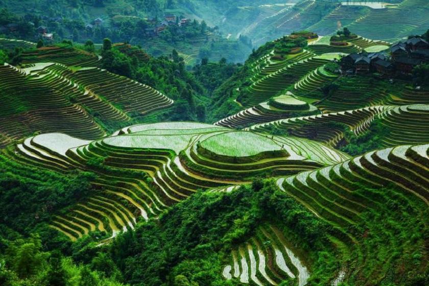 زیباترین تراس های برنج در جهان