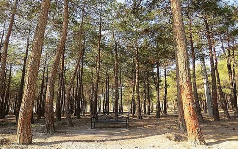 تعطیلی پارک ها و جنگل ها در روز طبیعت، پارک ها پیش از بازگشایی ضدعفونی می شوند