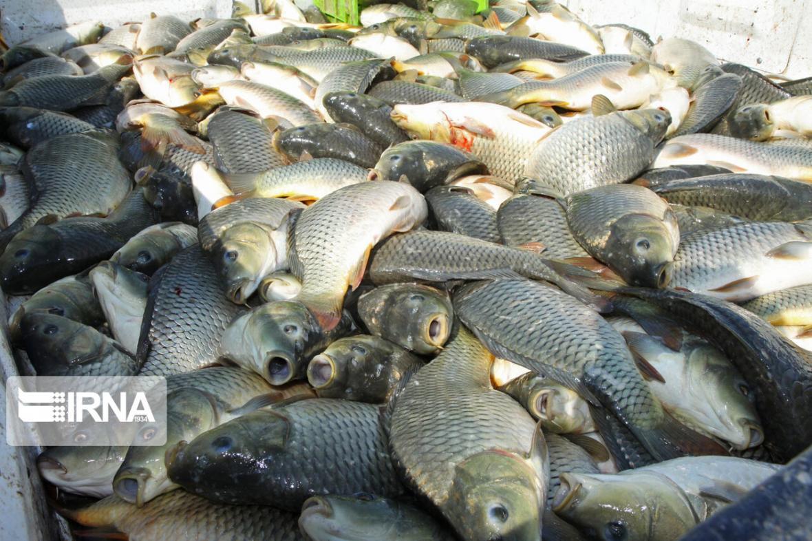 خبرنگاران صید 18 تُن ماهی از سد مهاباد