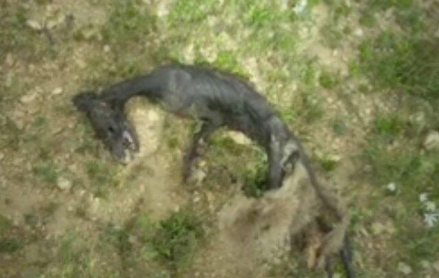 جنجال لاشه ها ، از کشتار بیرحمانه کوسه ها در خلیج فارس تا لاشه عجیب در خرم ناز