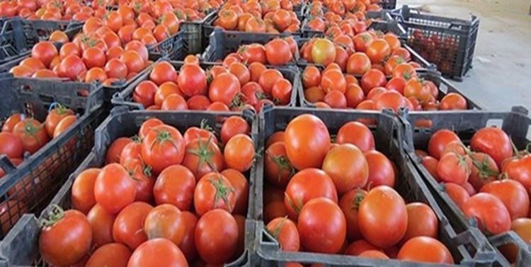چرا عراق 200 کامیون گوجه فرنگی ایران را برگشت داد؟