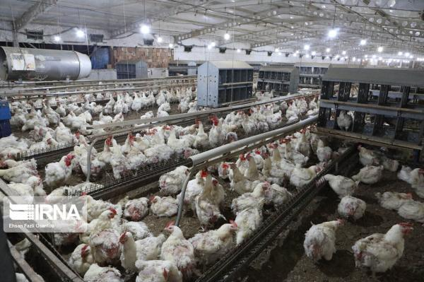 خبرنگاران فرایند تاسیس واحدهای تولیدی بخش کشاورزی در شهرستان همدان تسهیل می گردد