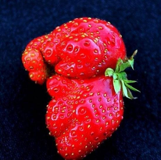 تصاویر جالب و خنده دار از میوه ها و سبزیجات