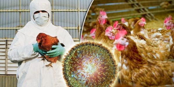 روسیه برای آنفلوآنزای مرغی واکسن ساخت