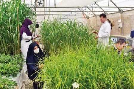 کشاورزی مدرن با کودهای شیمی کاران سبز طوبی
